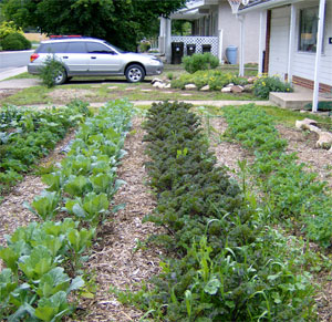 Case Studies For Edible Yards Community Food Systems